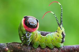 Chiêm ngưỡng 'nhan sắc' lung linh của những loài côn trùng đẹp nhất thế giới (Phần 2)