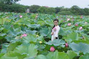 Kỳ lạ hoa sen nở rộ ở Ninh Bình và những địa điểm ' thả dáng' với sen không thể bỏ lỡ