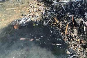 Giữa sự cố nước nhiễm dầu, nước sạch Sông Đà báo lãi 200 tỷ
