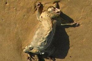Xác chết động vật bí ẩn dạt bờ gây xôn xao