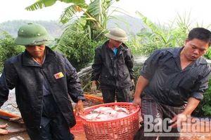 Bắc Giang: Giá thủy sản tăng nhẹ