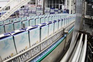 TH True Milk - doanh nghiệp sữa đầu tiên xuất khẩu sang Trung Quốc