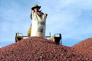 Đứng top đầu thế giới, 10 triệu hộ dân vẫn loanh quanh chợ làng