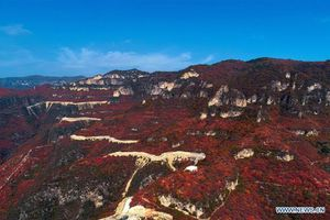 Mê mẩn với rừng phong núi Thái Hành Sơn ở tỉnh Hà Bắc, Trung Quốc