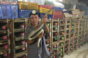 Phú Yên: Ớn lạnh người đàn ông nuôi đàn rắn độc hơn 1.000 con, dài cả mét