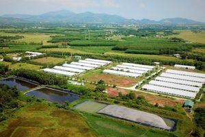 Giám đốc trại lợn 6.500 con xin lỗi dân vì xả thải ra suối