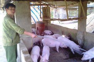 Khuyến khích các tổ chức, hộ gia đình, cá nhân đầu tư vào nông nghiệp, nông thôn