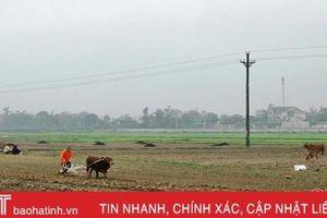 Tranh thủ nắng ráo, Vũ Quang tập trung hoàn thành hơn 1.380 ha cây vụ đông