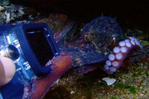 Bạch tuộc cố giằng chiếc camera trong tay thợ lặn