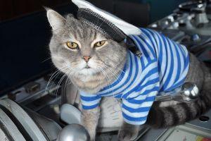 'Sĩ quan mèo' đầy uy lực trên chiếm hạm Nga