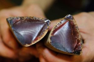 Người Nhật làm đặc sản cá ngừ cứng như đá thế nào?