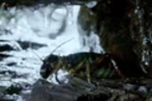 Dế to bằng chuột nhắt sống được ở môi trường - 10 độ C