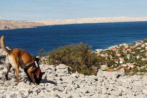 Chó nghiệp vụ đánh hơi giúp tìm thấy ngôi mộ 3.000 năm tuổi