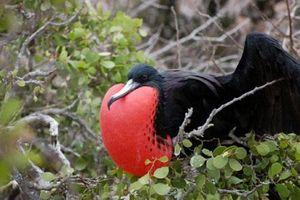Sự thực bất ngờ sau những 'quái' chim lạ nhất trên đời