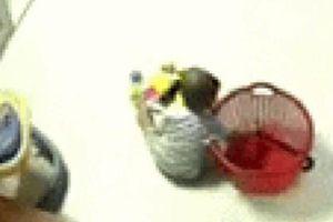 Hoảng hồn cảnh bé trai cầm con rắn đang ngoe nguẩy trong giỏ đồ chơi