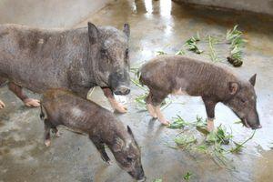 Chăn nuôi an toàn sinh học: Giải pháp tốt nhất kiểm soát dịch bệnh