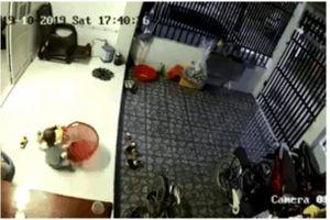 Clip: Kinh hãi nhìn rắn chui vào nhà, bé trai tưởng đồ chơi ở trong giỏ lôi ra nghịch