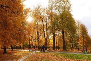 Nga: Rực rỡ mùa thu vàng tại công viên Kolomensk ở thủ đô Moskva