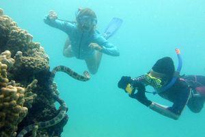 Hội 'Những người bà kỳ quái' phát hiện rắn biển độc khi lặn biển