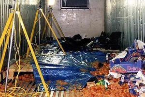 Từ vụ 39 thi thể trong container: Vén màn thủ đoạn của 'Đầu rắn' Trung Quốc