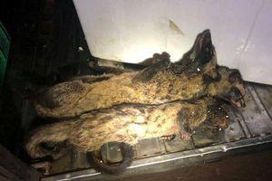 Lại phát hiện xe vận chuyển động vật hoang dã tại Đắk Lắk