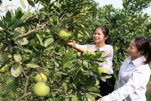 Bắc Giang: Gần 300 lượt đoàn viên nghèo vay vốn từ Quỹ quốc gia về việc làm