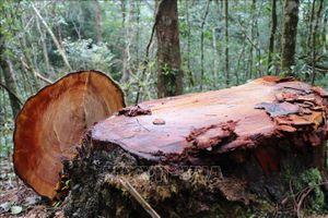 Bắt tạm giam giám đốc doanh nghiệp gỗ, kiểm điểm lãnh đạo huyện Ia Pa vì để mất rừng