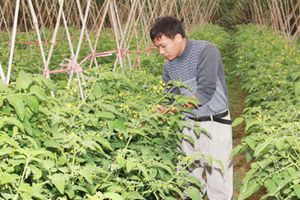 Hà Nam: Mô hình HTX thanh niên giúp nhiều bạn trẻ khởi nghiệp