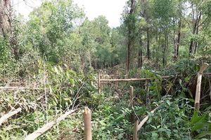 Hơn 4.000 cây keo bị kẻ xấu chặt hạ