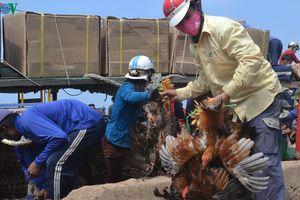 Người dân Lý Sơn dự trữ lương thực ứng phó với áp thấp nhiệt đới