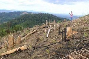 Đơn vị quân đội phá gần 600ha rừng: Thêm trưởng ban quản lý rừng bị khởi tố