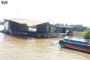 Sà lan đâm chìm bè, hơn 10 tấn cá lóc thoát ra sông Tiền