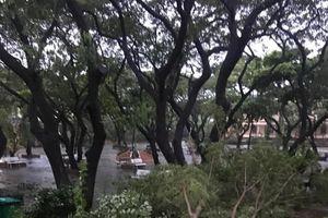 Bão số 5 giật cấp 12: Tâm bão nằm ngay khu vực Thành phố Quy Nhơn
