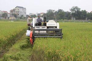 Gạo Đồng Phú hướng tới thị trường Mỹ