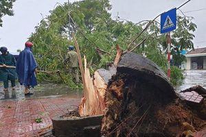 Quảng Ngãi: Cây xanh ngã đổ, mất điện diện rộng