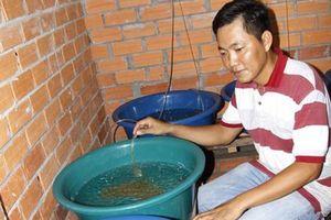 Vĩnh Long: Bỏ giám đốc lương 25 triệu về quê nuôi con trơn, lãi 1 tỷ