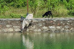 Hà Nội chỉ đạo xây dựng kế hoạch bảo vệ nguồn nước, báo cáo trước 20/11