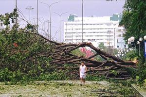 TP Quy Nhơn xác xơ sau bão số 5