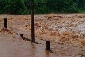 Quảng Ngãi: Cây đổ la liệt, lũ trên các sông lên nhanh