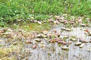 Đồng bằng sông Cửu Long: Báo động nước thải nông nghiệp
