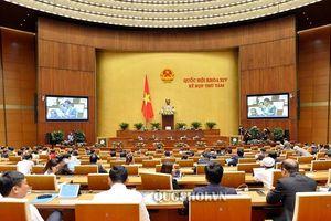 Đại biểu Quốc hội: Chính phủ rất cẩn trọng trong soạn thảo Dự thảo Nghị quyết xóa tiền phạt chậm nộp
