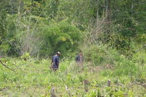 Khởi tố trưởng ban quản lý rừng phòng hộ vì để 'mất rừng'