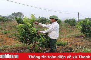 Hiệu quả phong trào thi đua 'Dân vận khéo' ở huyện Thạch Thành