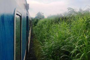 Tai nạn đường sắt tại Phú Yên, một phụ nữ tử vong