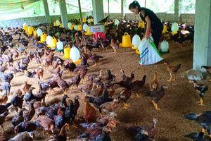 Nông dân miền núi xứ Thanh thoát nghèo nhờ vốn vay ưu đãi
