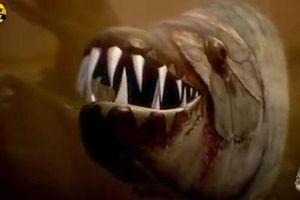 8 loài cá có khả năng săn bắt mồi trên cạn khiến bạn kinh ngạc