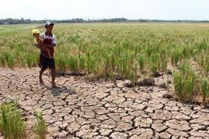 Cảnh báo hạn hán nghiêm trọng trong mùa khô 2019 – 2020