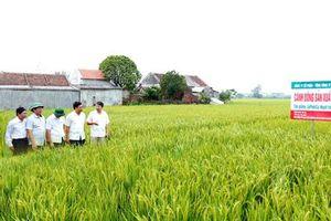 Tổng Công ty Giống cây trồng và con nuôi Ninh Bình: Tổ chức lại sản xuất theo hướng công nghệ cao
