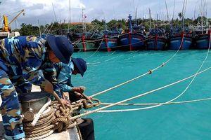 81 tàu cá vào Âu tàu đảo Sinh Tồn, Song Tử Tây tránh áp thấp nhiệt đới
