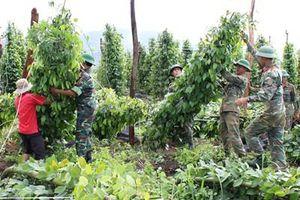 Quân đoàn 3 giúp nhân dân huyện Mang Yang khắc phục cơn bão số 5